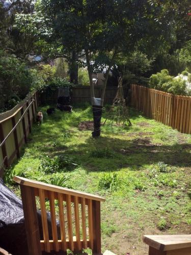 Back Yard: Before