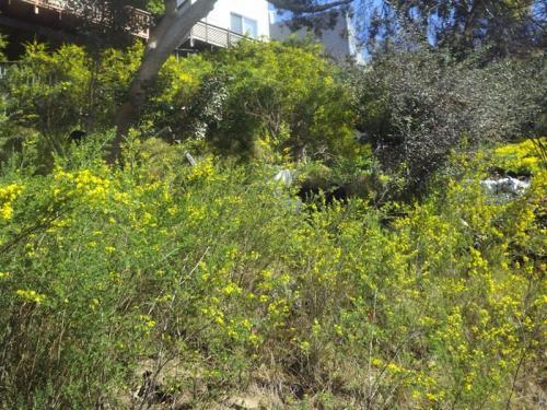 Flower Hill: Before