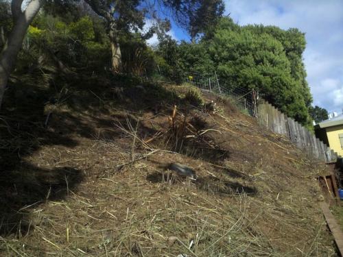 Flower Hill: After