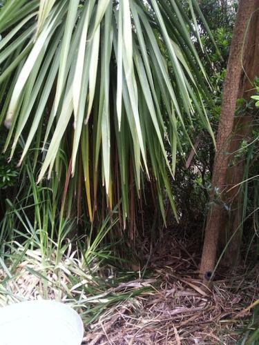 Jungle: Before